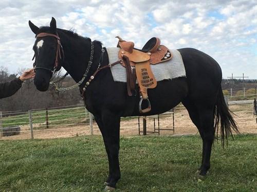 Horse Classified Ad Iris Meter Man
