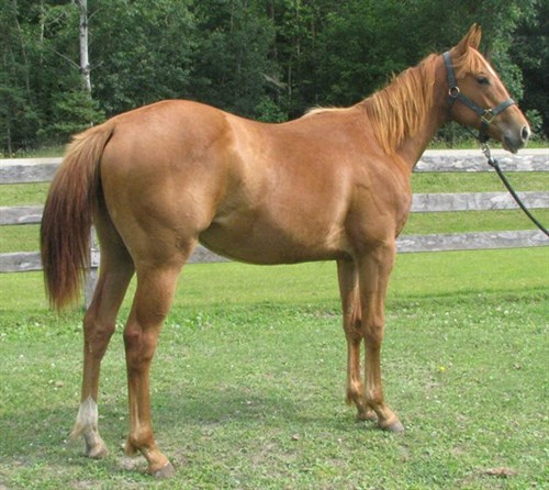 Horse Classified Ad Kan Share The Fame