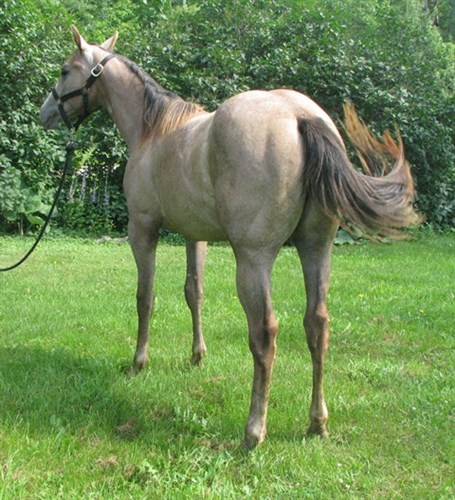 Horse Classified Ad Eyem Fleetly French
