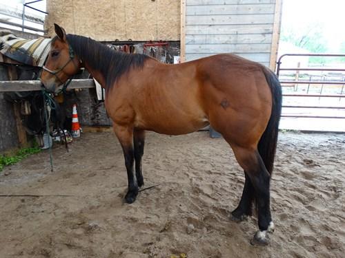 Horse Classified Ad Oakley