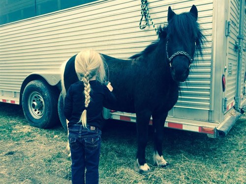 Horse Classified Ad Pixie