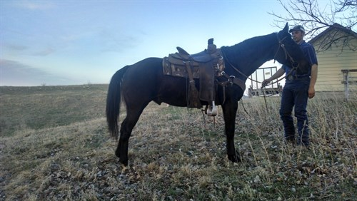 Horse Classified Ad Shadow