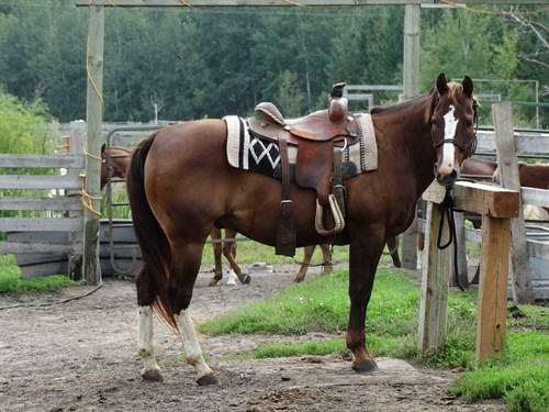 Horse Classified Ad JW