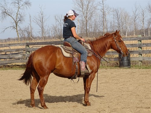 Horse Classified Ad Wade