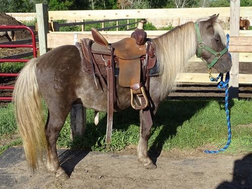 Horse Classified Ad Shiloh