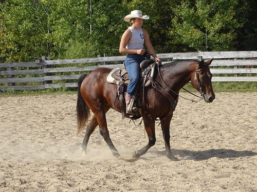 Horse Classified Ad Dexter