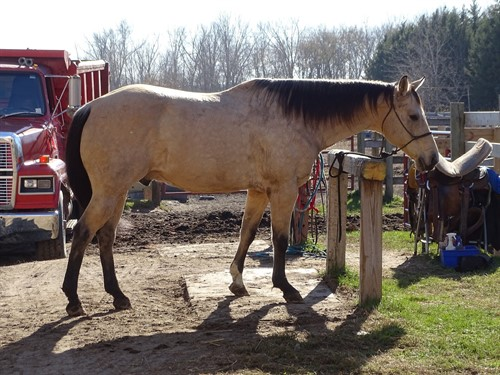 Horse Classified Ad Bonanza