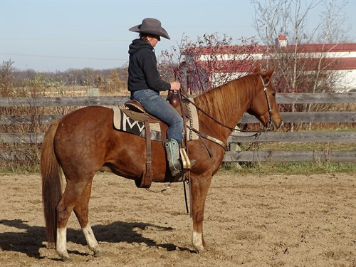 Horse Classified Ad Cedar