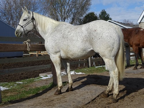 Horse Classified Ad Vegas