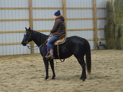 Horse Classified Ad Onyx