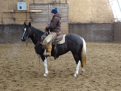 Horse Classified Ad Gemma