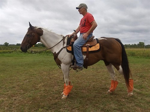 Horse Classified Ad Maverick