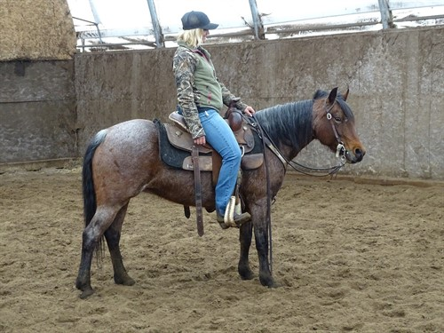 Horse Classified Ad  Trixie QH Pony