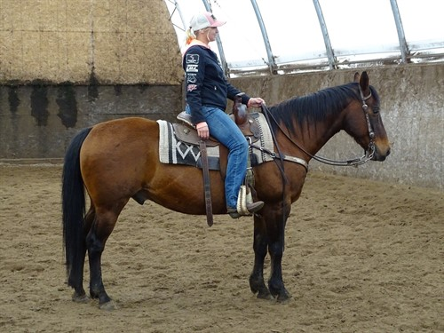 Scamp, Good Looking Bay Gelding, Nice trail horse