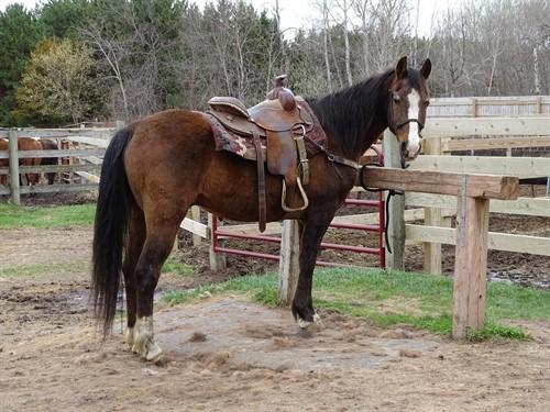 Horse Classified Ad Dutch