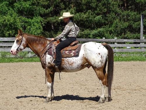 Chief, Good Looking App Gelding, Good Trail Horse
