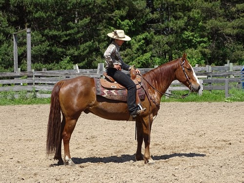 Lee, Well Broke Ranch Gelding, Great for cows or trails