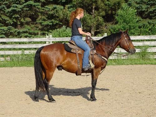Horse Classified Ad Colton