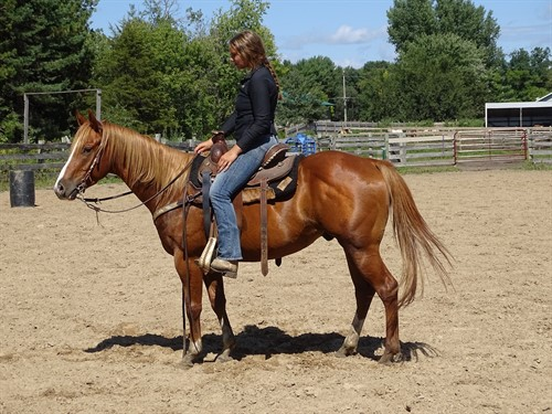 Horse Classified Ad Sal