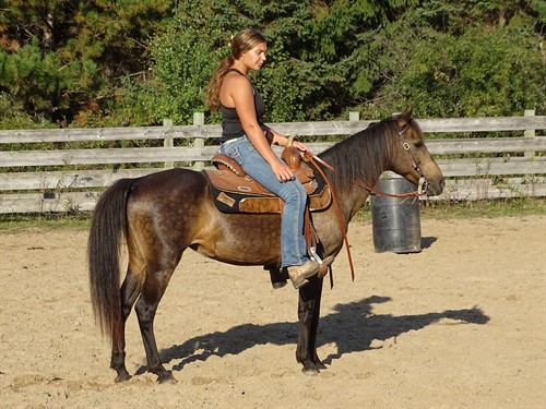 Horse Classified Ad Ginger