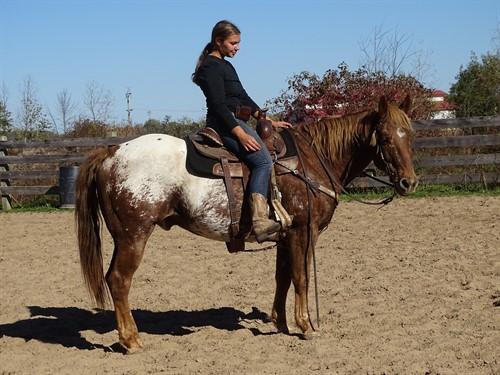 Horse Classified Ad Milo